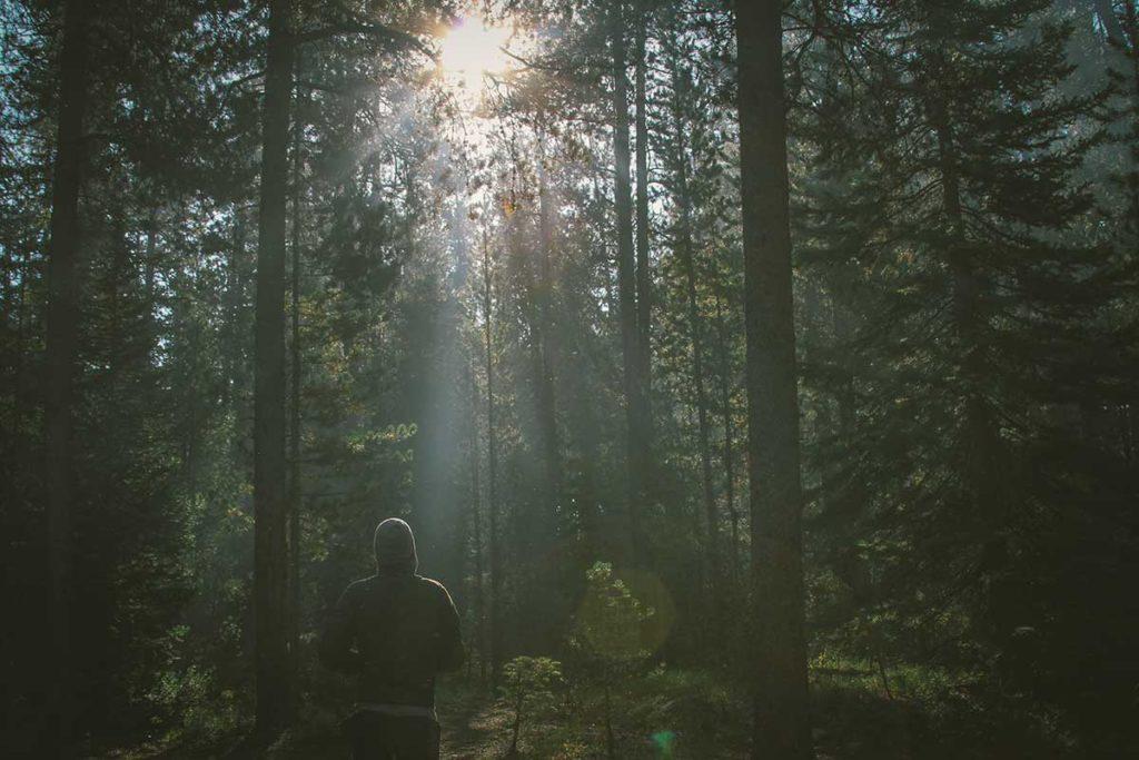 Ihminen kävelee metsässä