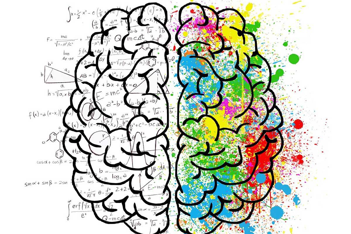 vasen aivopuolisko ja oikea aivopuolisko