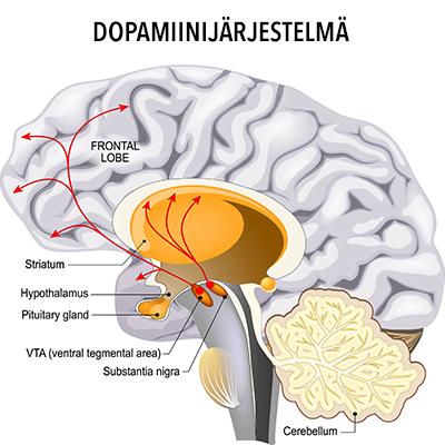 dopamiini ja aivot